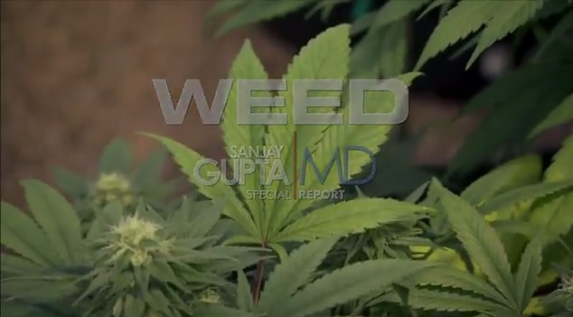 "Sanjay Gupta's ""WEED"" Documentary"