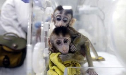 China clones gene-edited monkeys for sleep disorder research