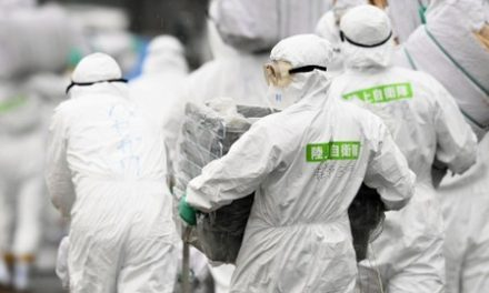 Swine fever spreads in Japan, 15,000 pigs to be culled